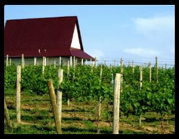 vineyardbuilding2